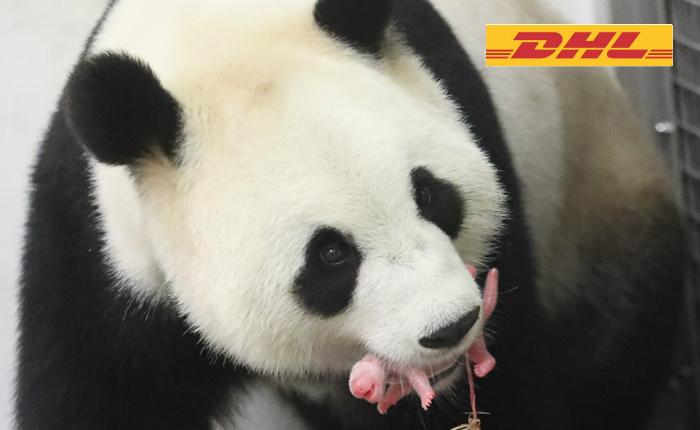 DHL_Panda