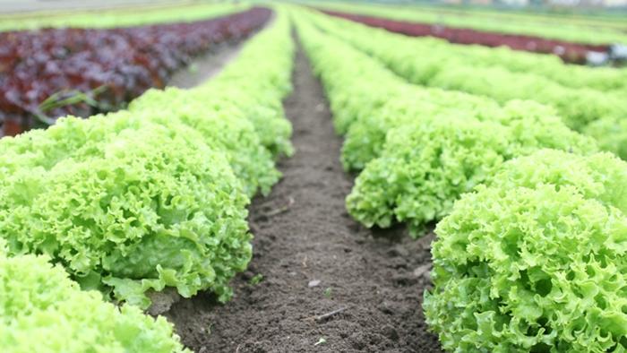 smart-farming-8