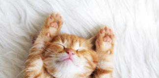 แมว // ภาพจาก Shutterstock