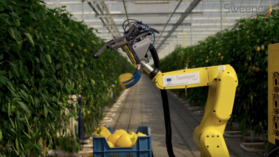 Sweeper หุ่นยนต์เก็บพริกหวาน