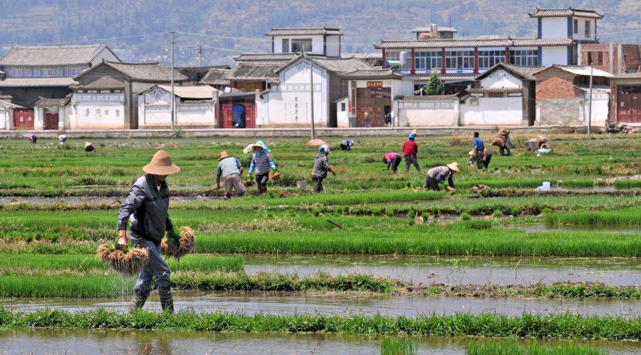 ชนบทจีน China Rural Village