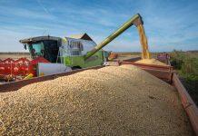 Soybeans Harvesting ถั่วเหลือง