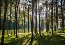 Thailand Forest ป่า ไทย