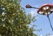 Tevel fruit-picking robot